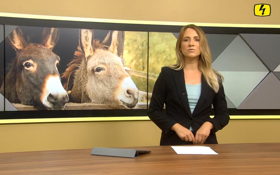 Tele Top: Die missverstandenen Vierbeiner, zwei Esel mit Medienfrau