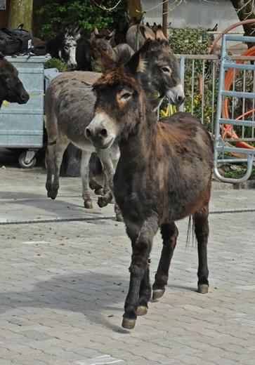 Esel Stiftung Eselhilfe vom Eselhof Aline