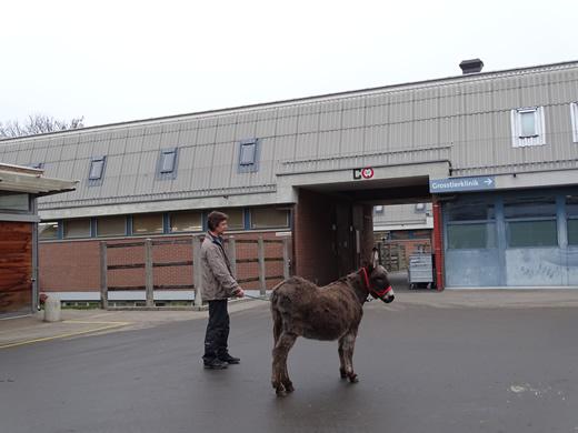 Esel Gina vor dem Tierspital Zürich