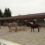 Esel im Neubau im Eselhof Aline 4