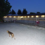 Neubau Eselhof Aline 128 Stiftung Eselhilfe und Fuchs