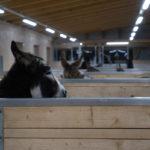 Esel in den neuen Stallungen auf dem Eselhof Aline-2