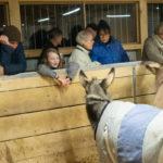 Mensch und Esel haben Freude aneinander auf dem Eselhof Aline