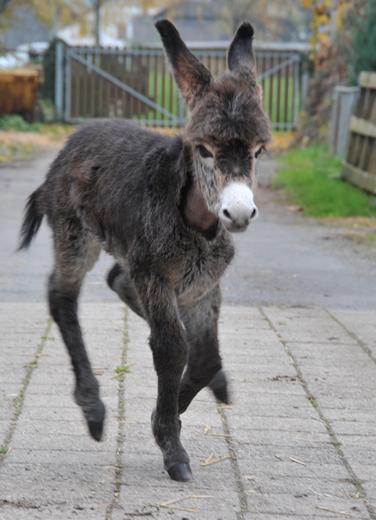 Prächtig Eselgesundheit - Stiftung Eselhilfe – Eselheim Aline @IY_07