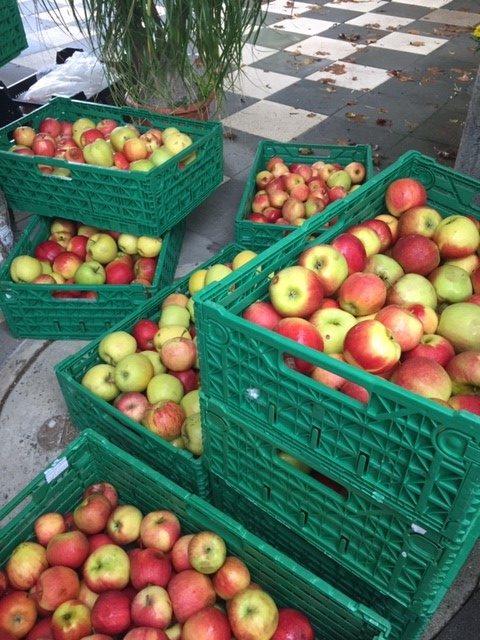 Firma Limatec bringt unseren Eseln ganze Harrasse Äpfel