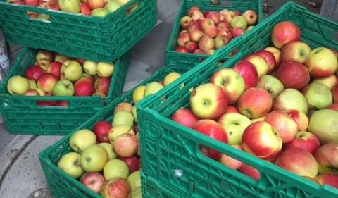Geschenk in Form von Äpfeln von der Firma Limatec für die Esel