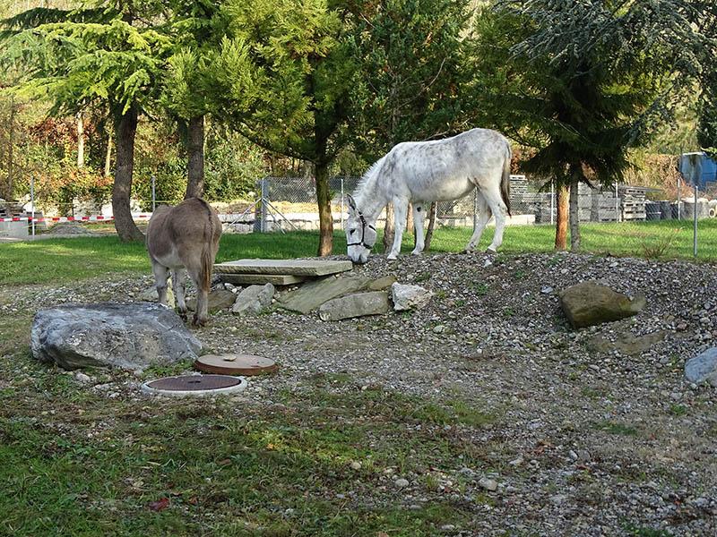 Esel Fridolin und Zora erkunden ihre neue Heimat Dez2019