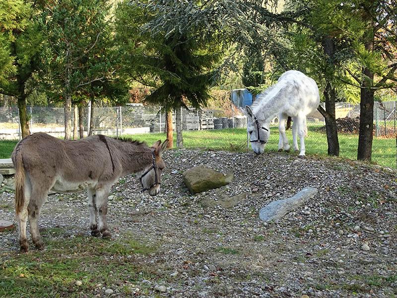 Esel Fridolin und Zora wohnten im ZürichZoo Dez2019