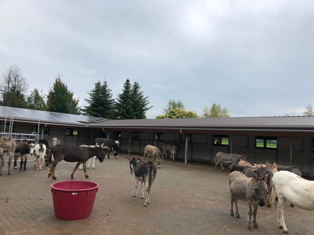 Lebenshoftag 2020 Eselherde und Stallungen