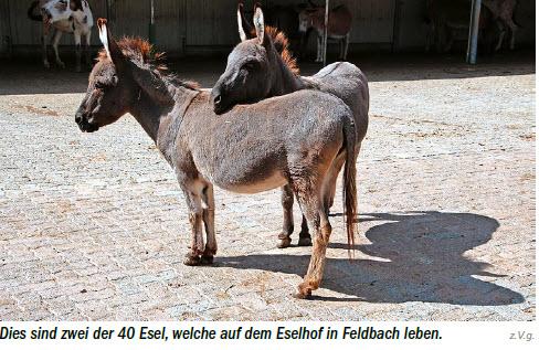 Aktion St-Gallen der Stiftung Eselhilfe Bericht Zeitung Okt20